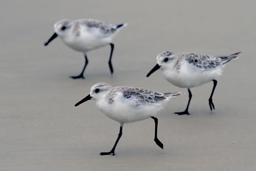 3 BIRDIES.jpg