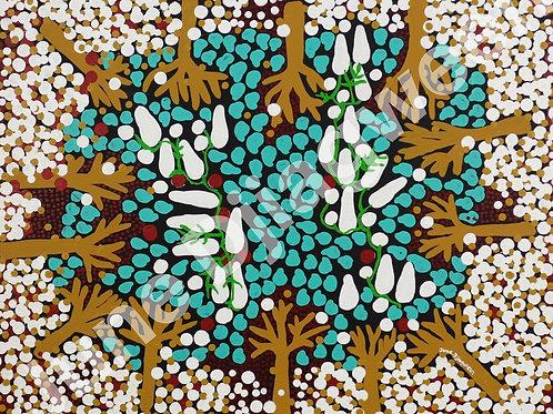 Sacred Gubinge Trees