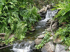 Waterfalland stream