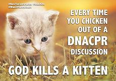 Kitten slide.jpg