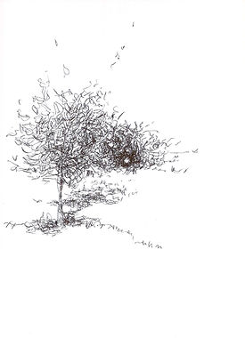 ot_(apfelbaum)_2011_kulli-papier_29,5_x_21_cm_monogrammiert_uk_11_edited.jpg