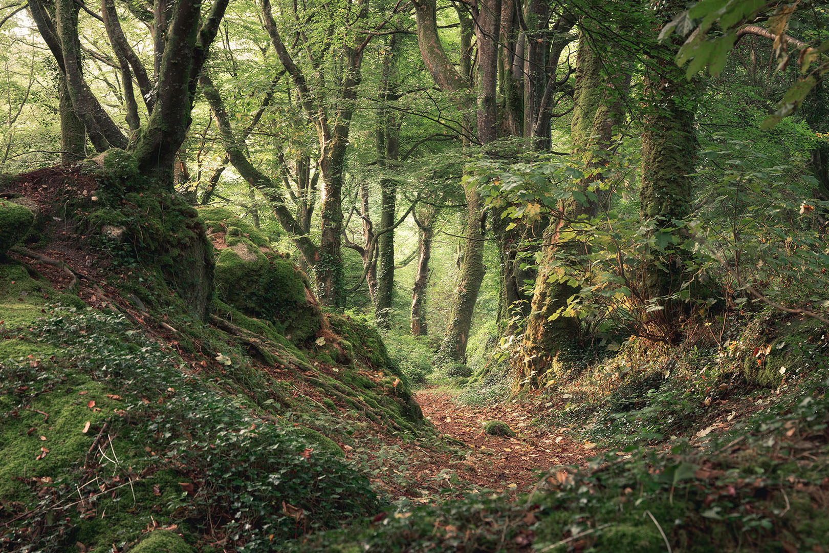 WOODLAND-WALK-(Penzance)-Andrew-Hocking.