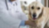veterinaria.png