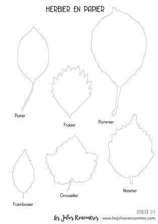 Herbier en Papier - Les Jolies Rencontre