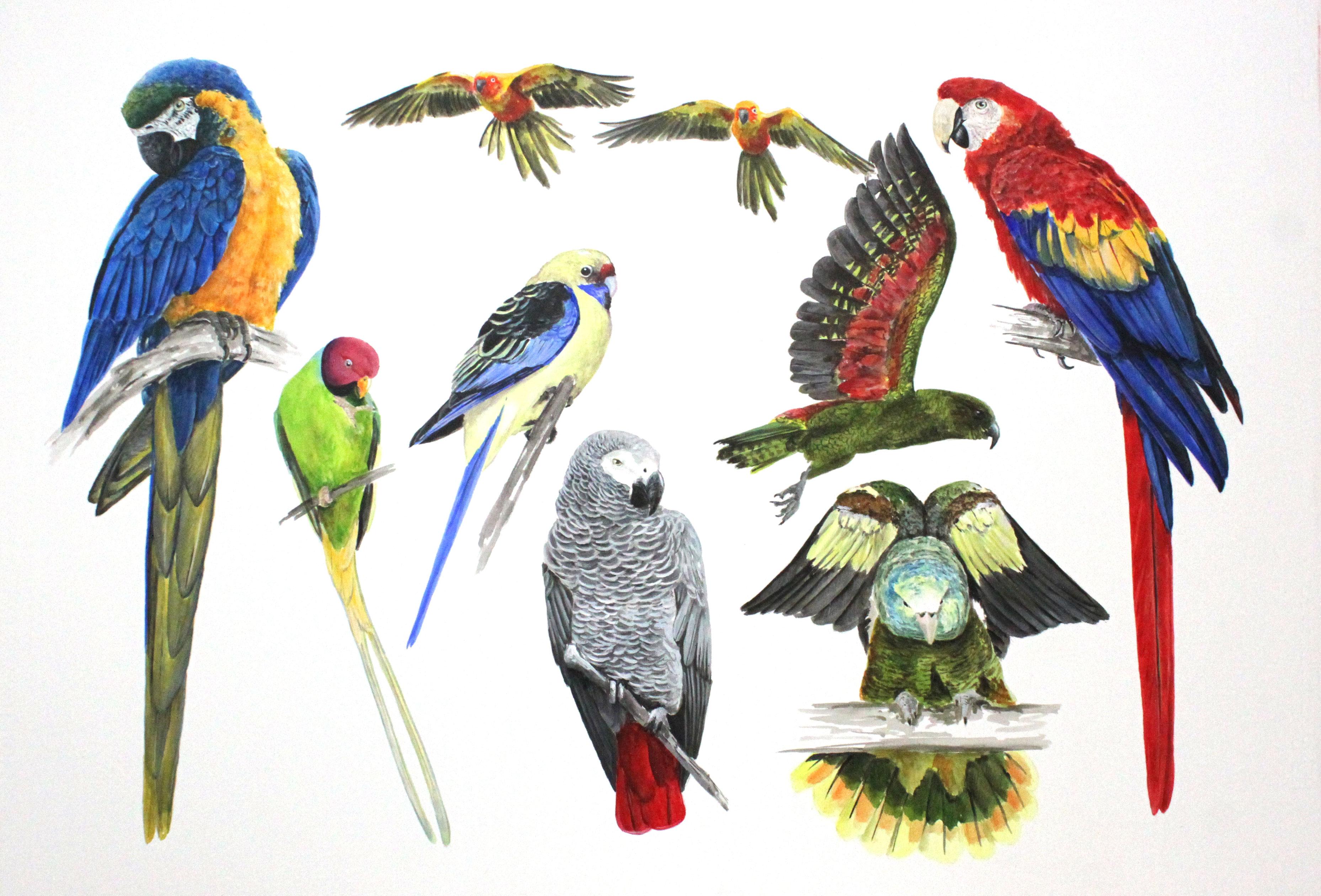 Company of Parrots 1