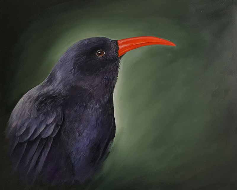 chough portrait