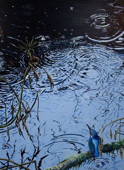 Ripples. Kingfisher painting