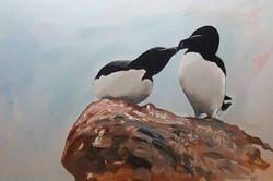 Razorbills of Skomer island