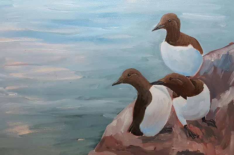 Guillemots of Skomer island