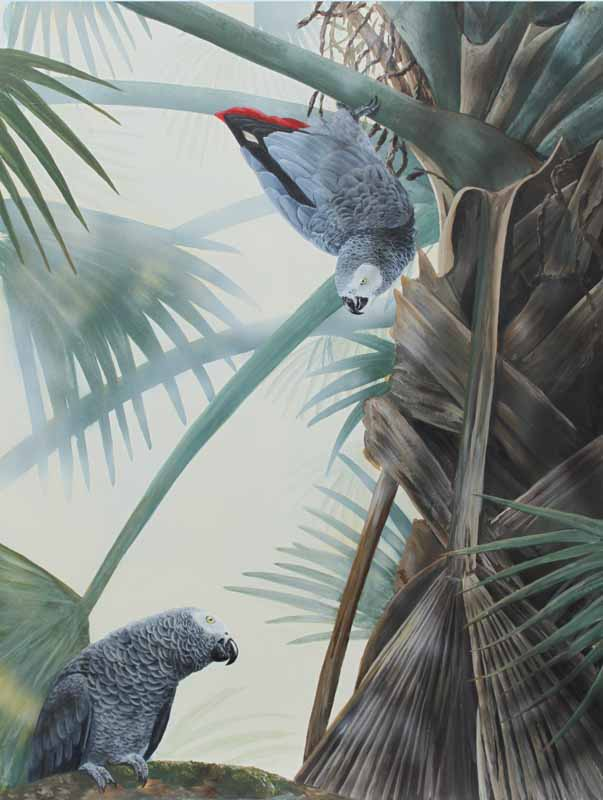 African grey Parrots. Interaction