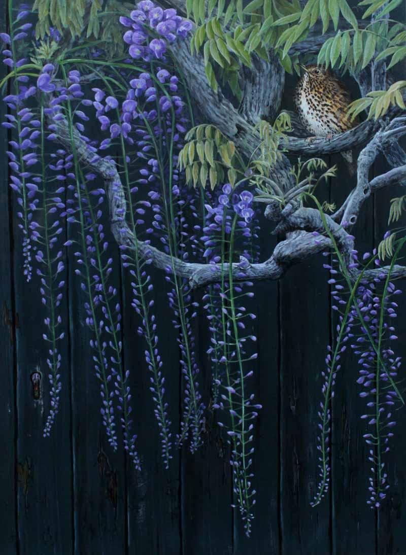 Secret garden. Song Thrush