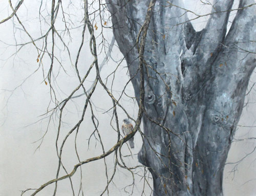 Kestrels perch