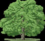 Дерево-3.png