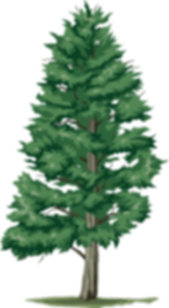 Дерево-2.png