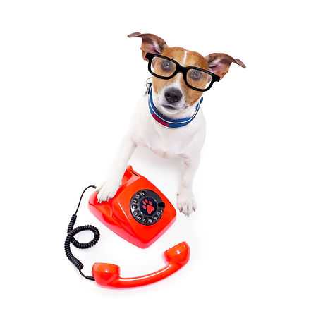 Dog Training Harpenden and St Albans