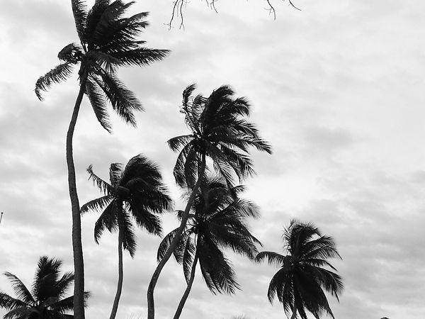 palm tree bnw.JPG