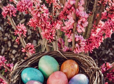 Wir wünschen allen ein schönes Osterfest und ruhige Feiertage 🌸🌷🐣🐰