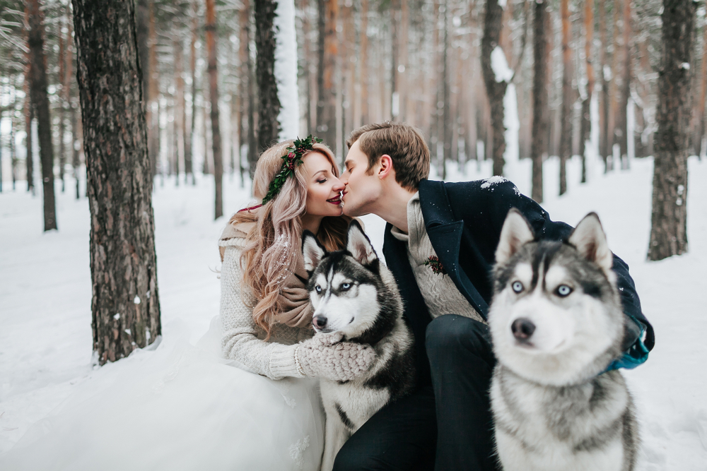 Winter wedding with husky