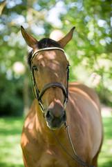Dizzy & Captain Horses