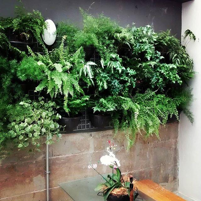 #jardimvertical #verticalgarden #greenwall #greenlife #green #garden #varanda