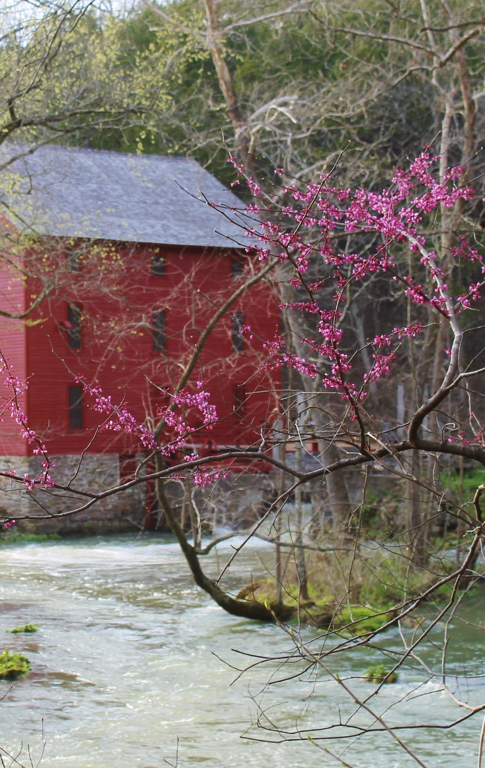 Mill in March