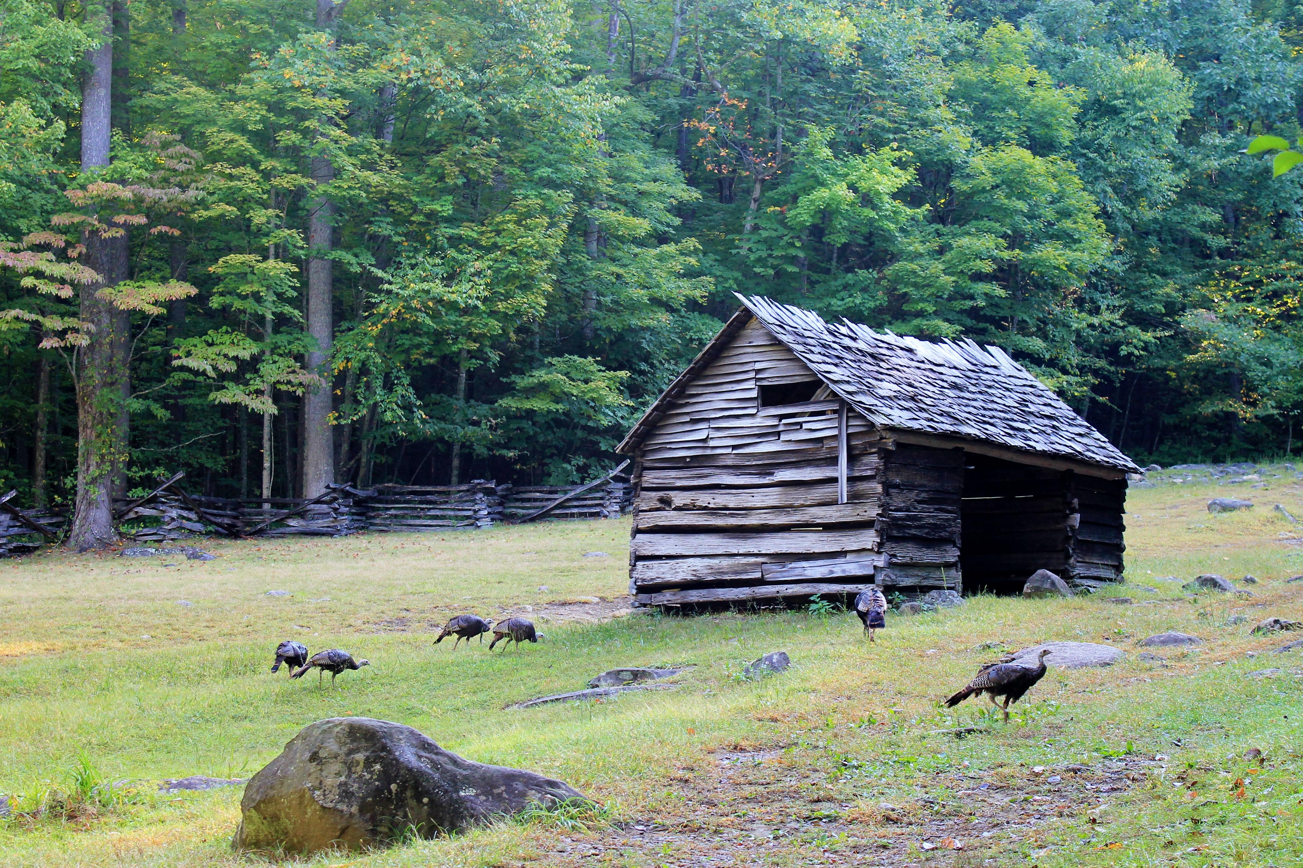 The Appalachian Trot