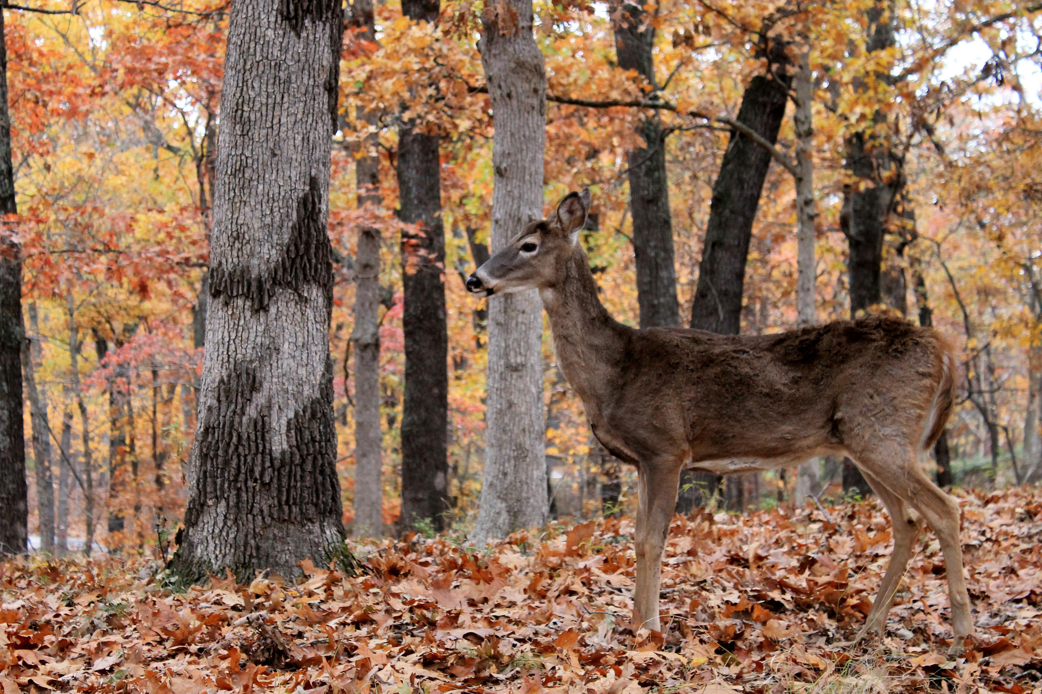 My Favorite Deer
