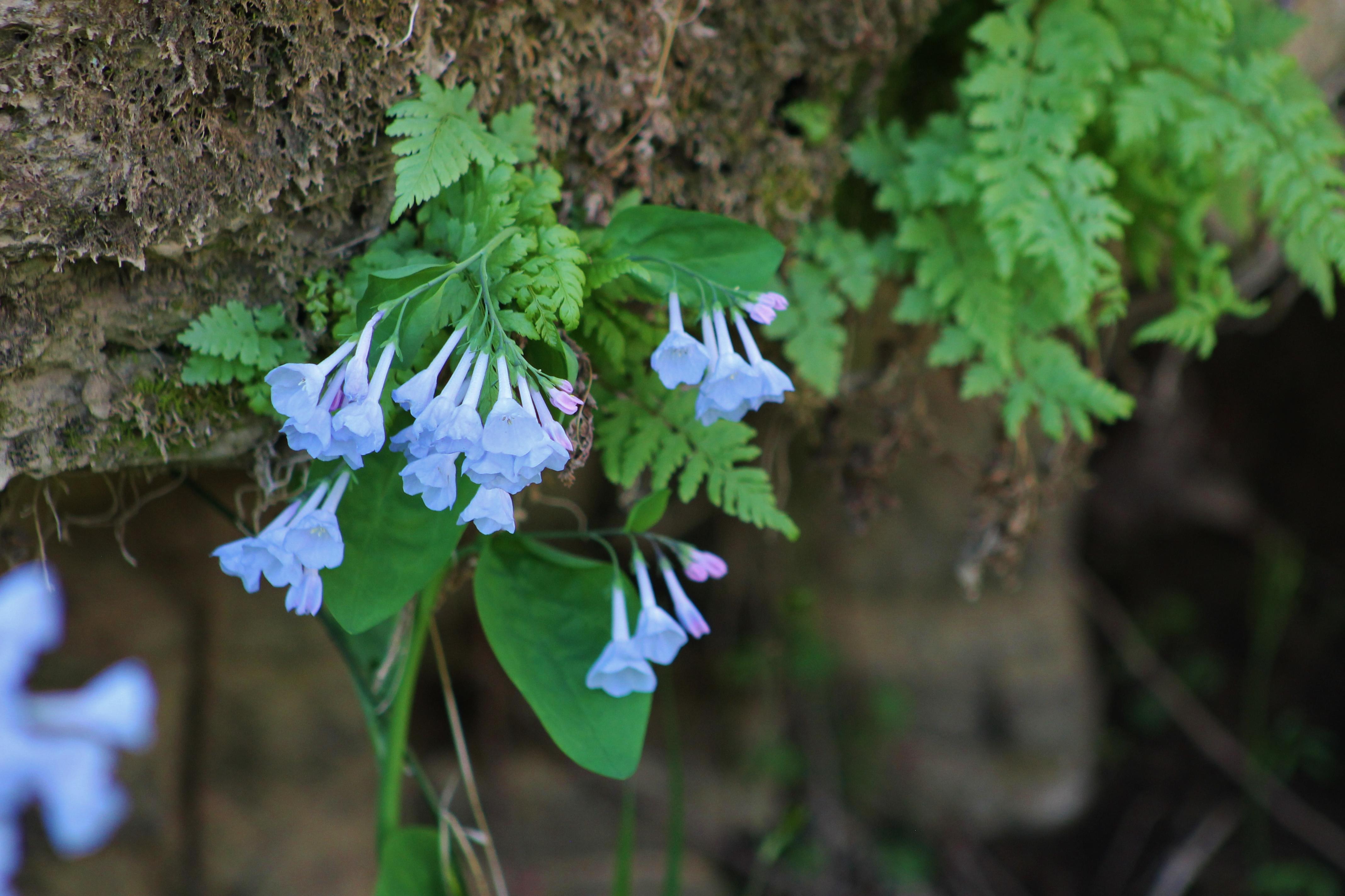 Bluff Flower