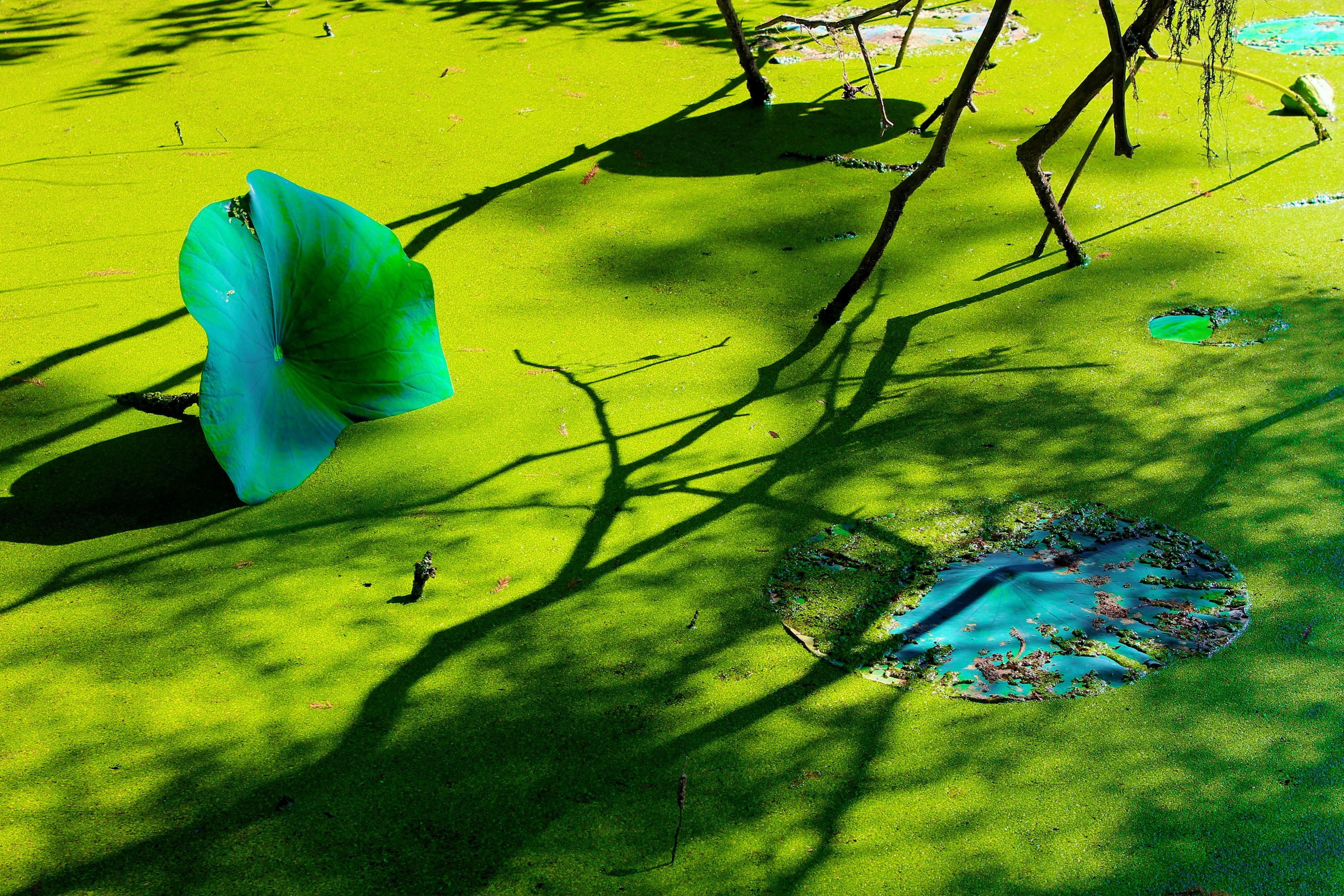 Swamp Dali