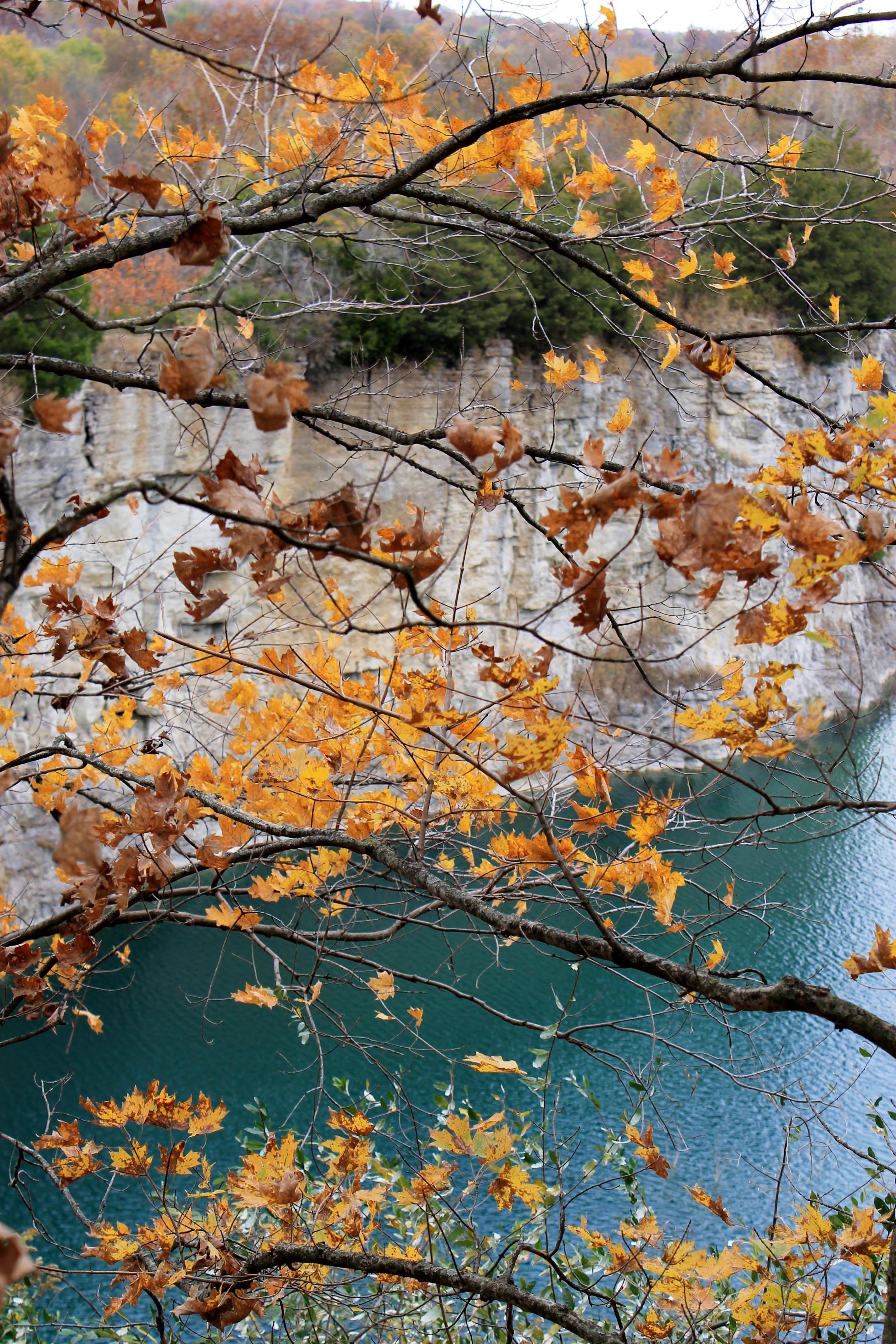 Quarry Branches