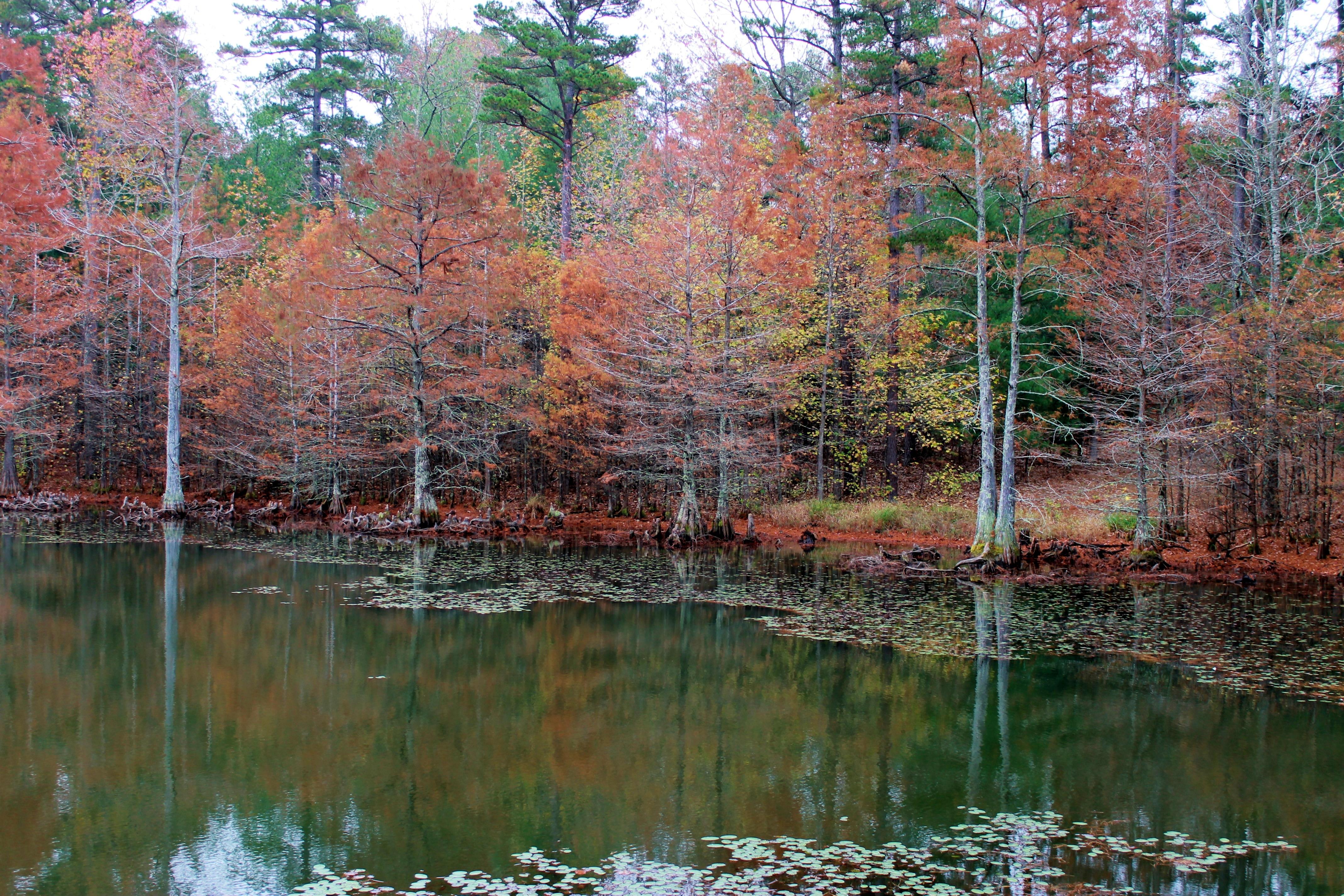 November, Buford Pond
