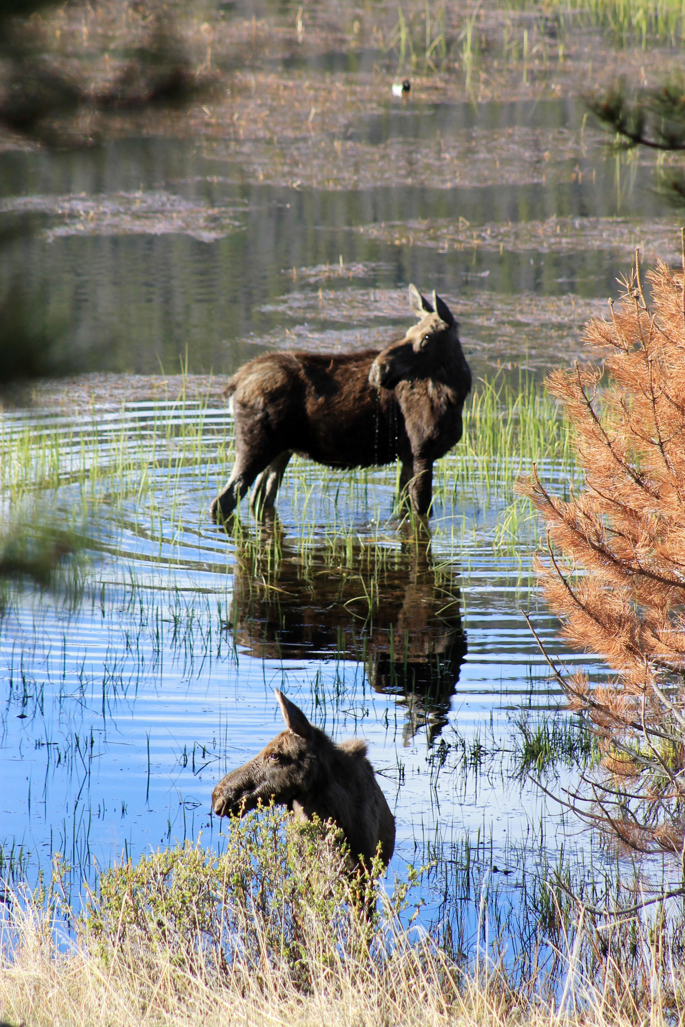 A Whisper on the Marsh