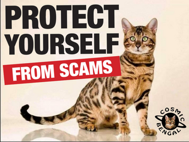 Looking for a Kitten? Don't want to get scammed? Arm yourself with the right questions.