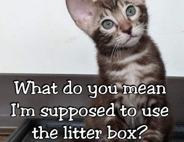 Litter box Problems?