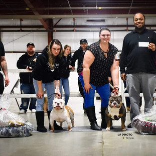 CANADA'S FIRST BRC SHOW 2019 GRCH MR ROYALTY (LEFT) AND GRCH CORVINUS (RIGHT)
