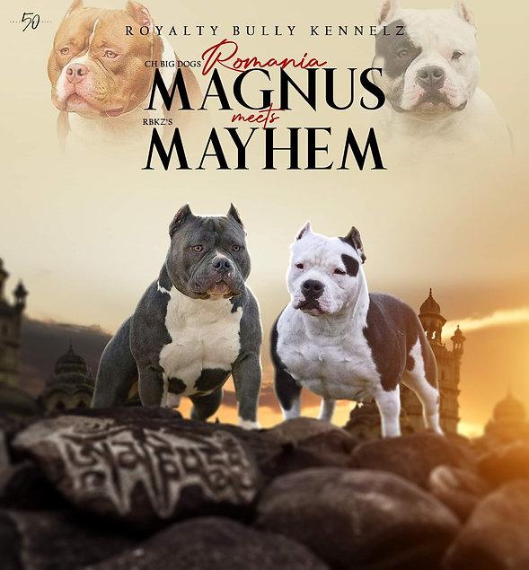 magnus x may.jpg