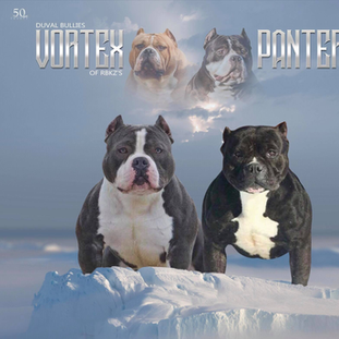 Vortex x Pantera Breeding 2019