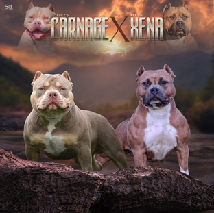 Carnage x Xena Breeding 2019