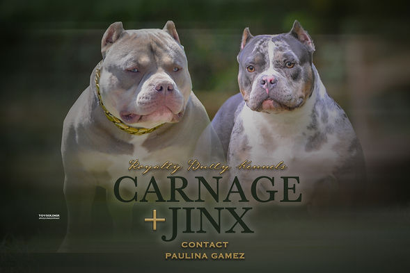 carnage x jinx banner.jpg
