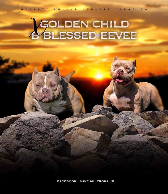 evee x golden child.jpg