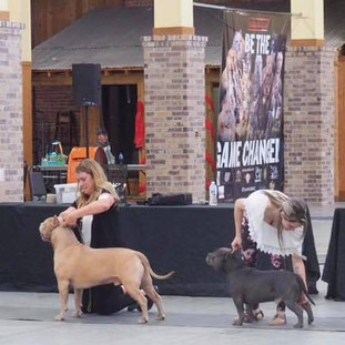 ABKC CAJUN BULLY BASH MAY 2019 (CH CREFLO DOLLA AND MYSELF ARE THIRD IN LINE)