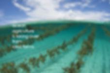 seafarm2.jpg