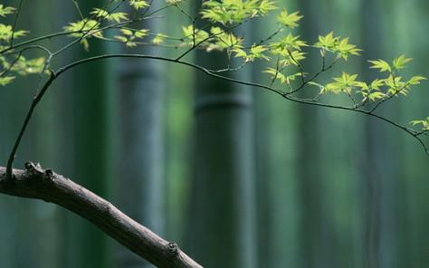 Consulenze e Trattamenti di Naturopatia