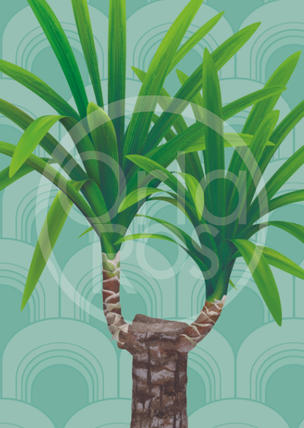 Yucca Plant Print