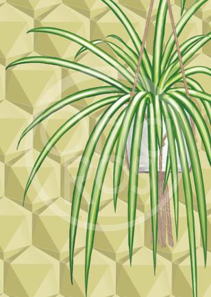Spider Plant Print
