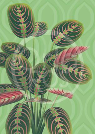 Prayer Plant Print
