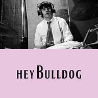 Hey Bulldog web.png