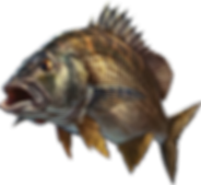 bream-1.png