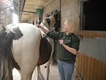 Laser therapy on a horse