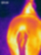 Thermal image of horses back
